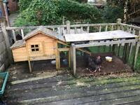 Chickens and enclosure