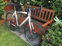 Specialized Allez Men's Road Bike Excellent Condition