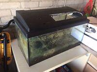"Aquarium Fish Tank & Accessories (24""x12""x12"")"