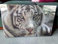 Canvas Print - close up of a Tiger