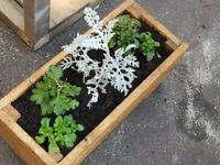 RUSTIC LOOK PLANTER WITH FLOWERS **HALF PRICE** LAST CHANCE AT THIS PRICE