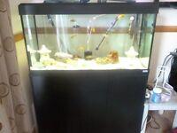fluval roma 200 aquarium full set up immaculate