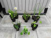 16 x Hardy Garden Plants in Pots - + 2 Extra pots FREE - £20 - Glenrothes