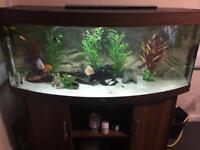 Juwel vision 450 full setup with discus fish