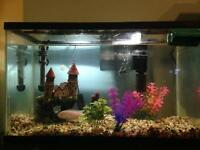 Cichlid fish and tank for sale