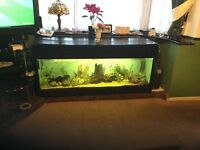 Large Fish Tank for sale, includes external filter, fish, all plans and accessories