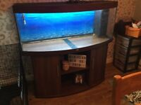 Jewel vision 450, 5ft bow front fish tank