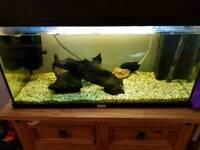 Jewel 125 litre fish tank