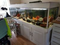 1200ltr fish tank for sale