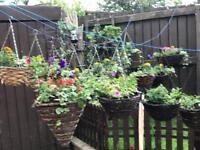Various size Hanging Baskets