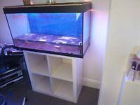 4ft aquarium