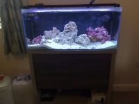 Fluval M90 reef tank full set up, rock, sand, heaters, pumps, skimmer and loads more accessories