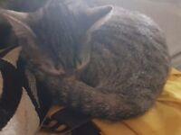 5 femalw kittens for sale