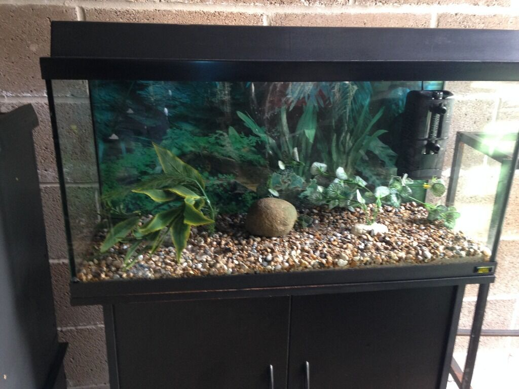 fish tank 80cm nerly 3 ft juwel fish tank 80cm set up with filter light 2017 fish