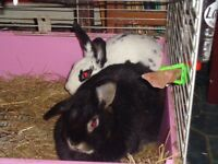 3 Rabbits need a new home