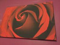 Red rose canvas big