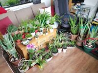 Plants Healthy ORGANIC in beautiful pots, Aloe Vera, Spider,succulent cactus, Rosemary, FROM £1