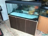 Fluval Roma 240 tank and stand