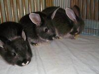three beautiful bunnies