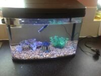 Fish tank with built in blue and white led lights,gravel,heater,ornaments,size is 50x38x25 cm,