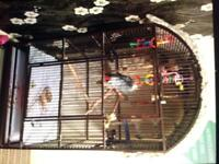 Parrot cage for sale CAGE ONLY