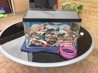 "24"" Wide Fish Tank Filter Air Pump Power Liquid Filter Food Ocean & Rock Scene Light Lid"