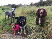 Dog Walker and Day Care