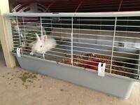 White Bunny and Cage (1year old)