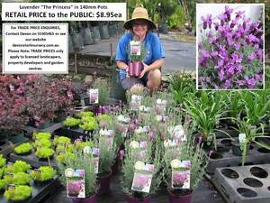 HUGE RANGE OF QUALITY PLANTS - Trade & Public Welcome! Mudgeeraba Gold Coast South Preview