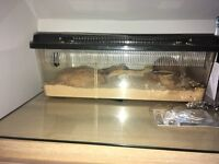Gecko with cage and all accesories FREE to a good home