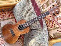 Kala KA-ASAC-CE Solid Acacia Electro Acoustic Concert Ukulele