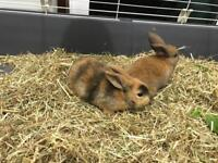 Adorable pair of brown baby rabbits