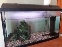 Tropical fish tank with 4 small fish , really easy to keep, heater and filter.