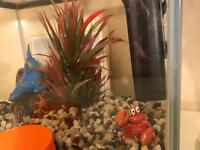 Aquarium starter kit 12Litre
