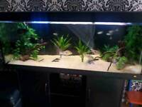 5 FT JEWEL RIO 400..FISHTANK IN BLACK WITH MATCHING CABINET