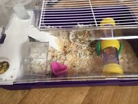 2 Hamsters for sale with cage