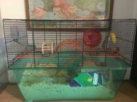 Gerbils x 2 males plus cage and all accessories