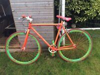 Funky adults Urban Fixie bicycle