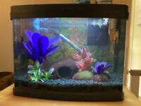 Tropical tank, fish, stand & extras