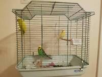 Big cage with 3 budgies