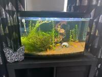 60Ltr fish tank plus accessories