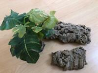 Reptile drift wood and plant