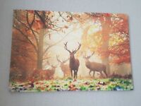 Beautiful Stag picture in forest setting