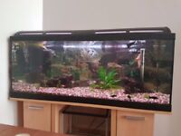 Fish Tank / Aquarium 160L with stand and full set extras