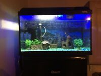 Tropical fish tank and set up