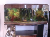 Fish tank bow front with matching housing