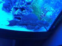 Jewel fish tank 190 with everything
