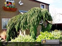 Woolly Mammoth Life-Size Garden Sculpture Recycled Cypress Tree Wood | Wooddy Mammoth