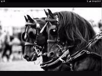 BARN/HORSE HAND AVAILABLE
