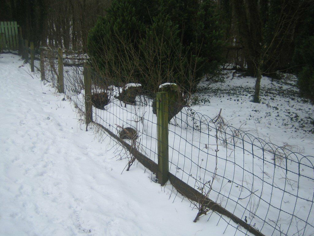 Pvc Coated Green Wire Fence | in Galston, East Ayrshire | Gumtree